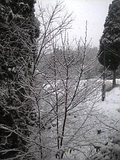 雪 雪 雪〜〜